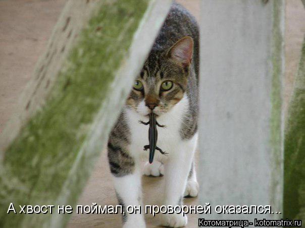 Котоматрица: А хвост не поймал,он проворней оказался...