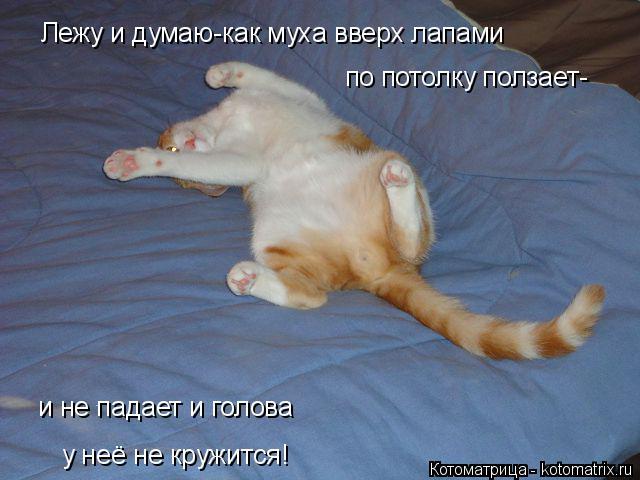 Котоматрица: Лежу и думаю-как муха вверх лапами по потолку ползает- и не падает и голова у неё не кружится!