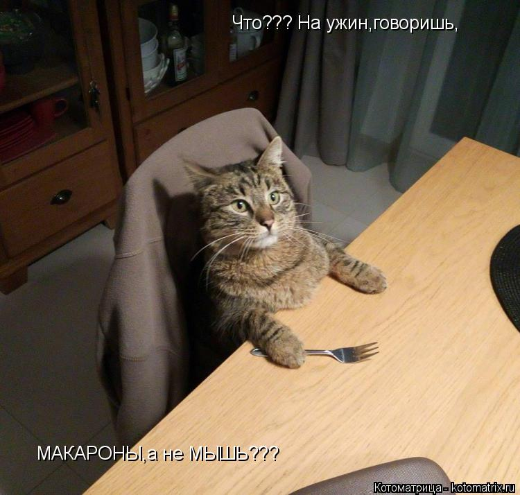 Котоматрица: Что??? На ужин,говоришь, МАКАРОНЫ,а не МЫШЬ???