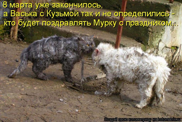 Котоматрица: 8 марта уже закончилось,  а Васька с Кузьмой так и не определились -  кто будет поздравлять Мурку с праздником...
