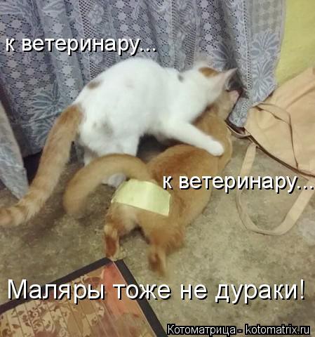 Котоматрица: к ветеринару... к ветеринару... Маляры тоже не дураки!