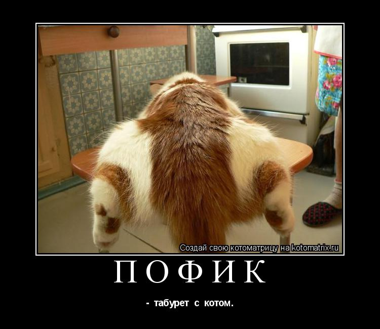 Котоматрица: ПОФИК  -  табурет  с  котом.