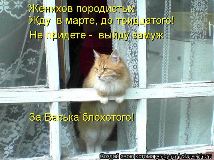 Котоматрица: Женихов породистых Жду  в марте, до тридцатого! Не придете -  выйду замуж За Васька блохотого!