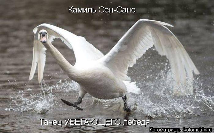 Котоматрица: Камиль Сен-Санс Танец УБЕГАЮЩЕГО лебедя