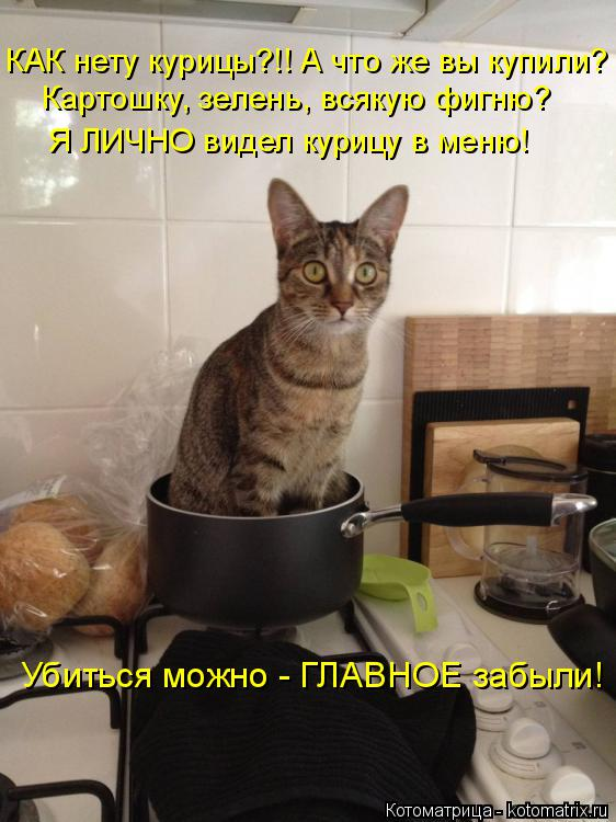 Котоматрица: КАК нету курицы?!! А что же вы купили? Картошку, зелень, всякую фигню? Я ЛИЧНО видел курицу в меню! Убиться можно - ГЛАВНОЕ забыли!