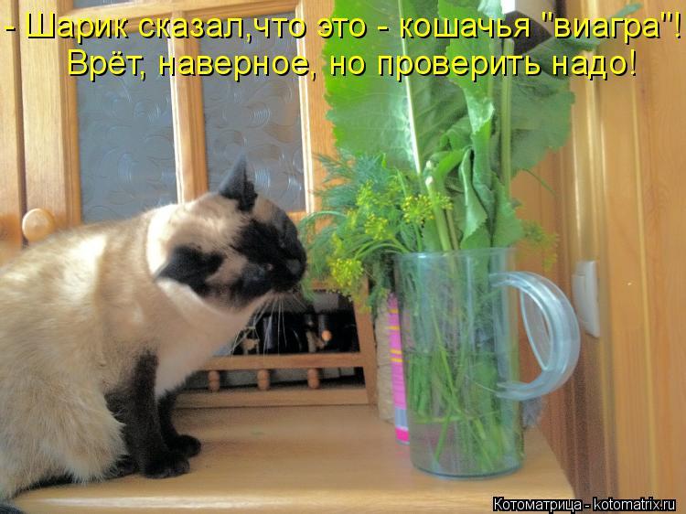 """Котоматрица: - Шарик сказал,что это - кошачья """"виагра""""! Врёт, наверное, но проверить надо!"""