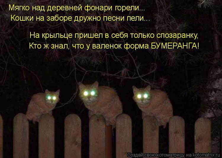 Котоматрица: Мягко над деревней фонари горели... Кошки на заборе дружно песни пели... Кто ж знал, что у валенок форма БУМЕРАНГА! На крыльце пришел в себя то
