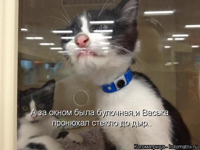 Котоматрица: А за окном была булочная,и Васька пронюхал стекло до дыр..