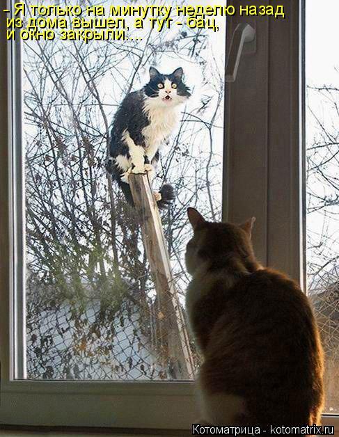 Котоматрица: и окно закрыли.... из дома вышел, а тут - бац,  - Я только на минутку неделю назад