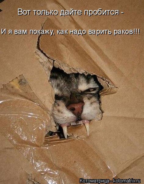 http://kotomatrix.ru/images/lolz/2016/03/20/kotomatritsa_h.jpg