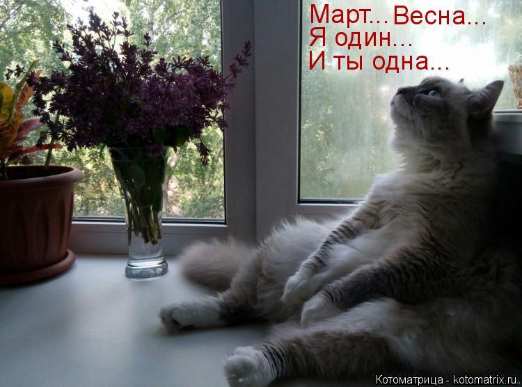 Котоматрица: Март... Весна... Я один... И ты одна...