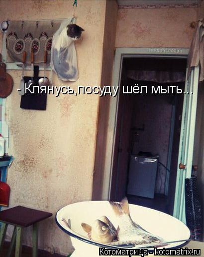Котоматрица: - Клянусь,посуду шёл мыть...