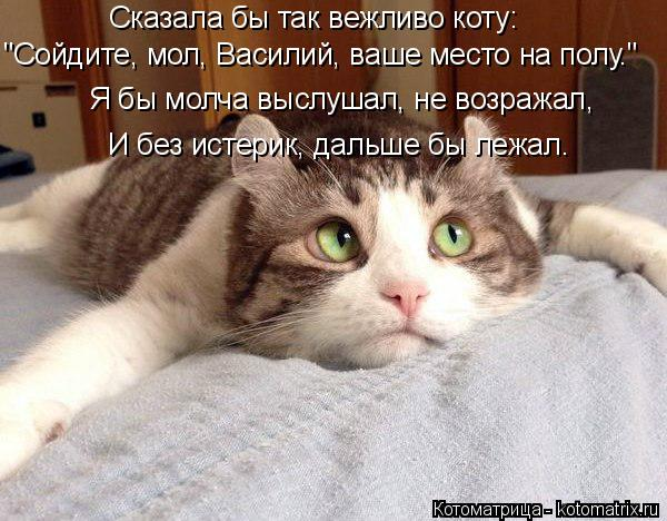 """Котоматрица: Сказала бы так вежливо коту: """"Сойдите, мол, Василий, ваше место на полу.""""  Я бы молча выслушал, не возражал, И без истерик, дальше бы лежал."""