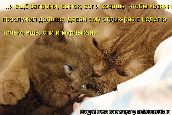 http://kotomatrix.ru/images/lolz/2016/03/23/kotomatritsa_Zo.jpg