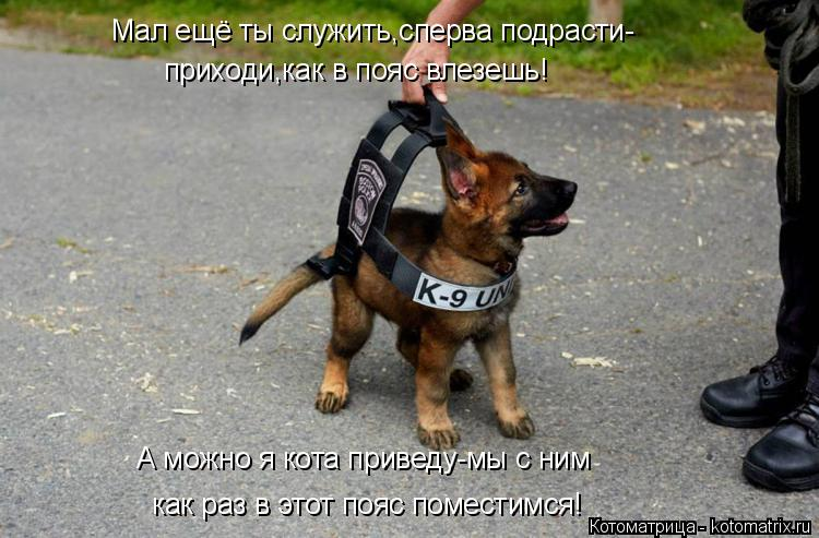 Котоматрица: Мал ещё ты служить,сперва подрасти- приходи,как в пояс влезешь! А можно я кота приведу-мы с ним как раз в этот пояс поместимся!