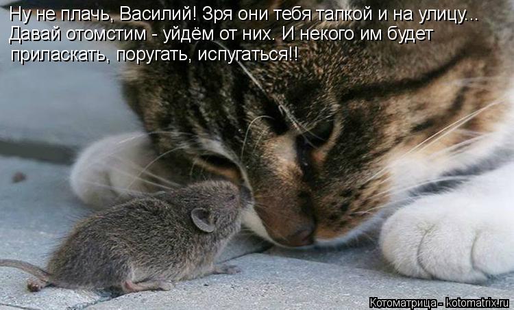 Котоматрица: Давай отомстим - уйдём от них. И некого им будет  Ну не плачь, Василий! Зря они тебя тапкой и на улицу... приласкать, поругать, испугаться!!
