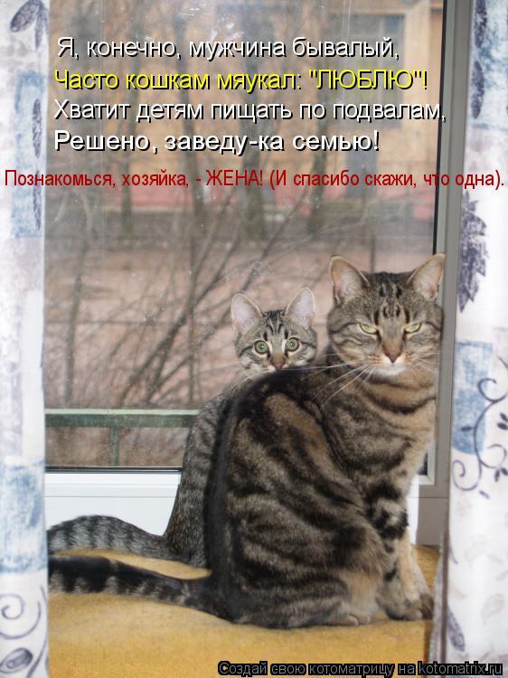"""Котоматрица: Часто кошкам мяукал: """"ЛЮБЛЮ""""! Я, конечно, мужчина бывалый, Хватит детям пищать по подвалам, Познакомься, хозяйка, - ЖЕНА! (И спасибо скажи, что о"""