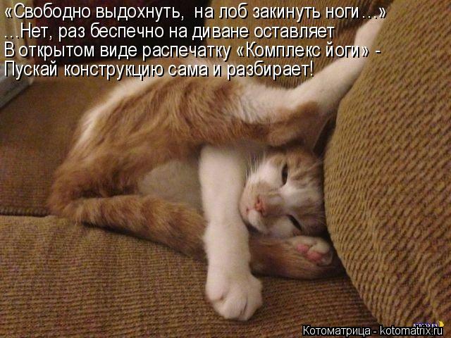 Котоматрица: «Свободно выдохнуть,  на лоб закинуть ноги…» …Нет, раз беспечно на диване оставляет В открытом виде распечатку «Комплекс йоги» - Пускай ко