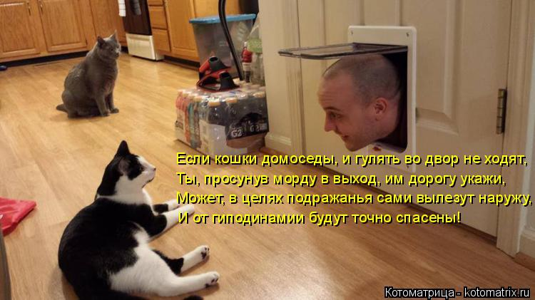 Котоматрица: Если кошки домоседы, и гулять во двор не ходят, Ты, просунув морду в выход, им дорогу укажи, Может, в целях подражанья сами вылезут наружу, И о