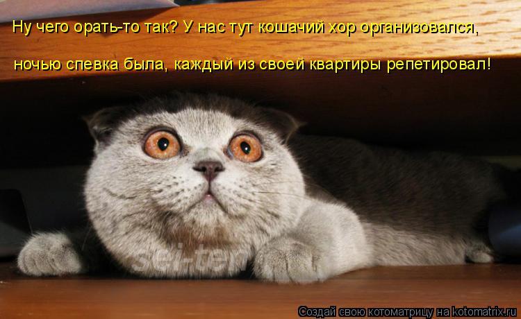 Котоматрица: Ну чего орать-то так? У нас тут кошачий хор организовался,  ночью спевка была, каждый из своей квартиры репетировал!