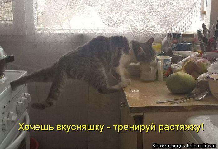 Котоматрица: Хочешь вкусняшку - тренируй растяжку!