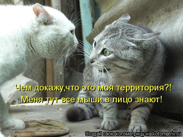 Котоматрица: Чем докажу,что это моя территория?! Меня тут все мыши в лицо знают!
