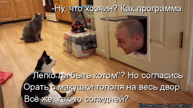 """Котоматрица: -Ну, что хозяин? Как программа """"Легко ли быть котом""""? Но согласись Орать с макушки тополя на весь двор Всё же, как-то солидней?"""