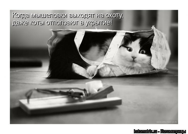Котоматрица: Когда мышеловки выходят на охоту, даже коты отползают в укрытие!