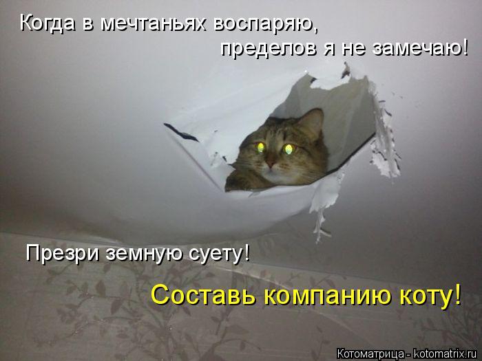 Котоматрица: Когда в мечтаньях воспаряю,  пределов я не замечаю! Презри земную суету!  Составь компанию коту!