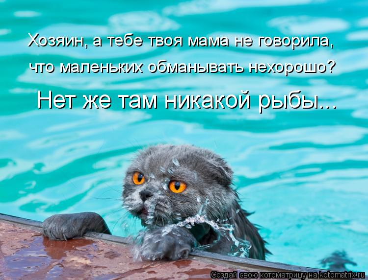 Котоматрица: Хозяин, а тебе твоя мама не говорила, что маленьких обманывать нехорошо? Нет же там никакой рыбы...