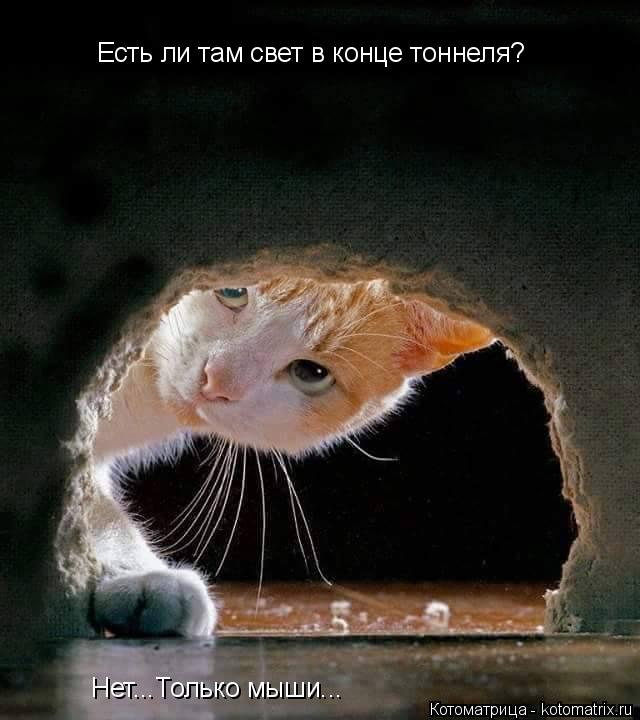 Котоматрица: Есть ли там свет в конце тоннеля? Нет...Только мыши...