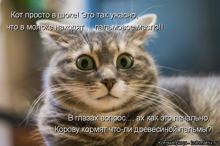 Котоматрица: Кот просто в шоке! Это так ужасно, что в молоке находят ... пальмовое масло!! В глазах вопрос..., ах как это печально... Корову кормят что-ли древе