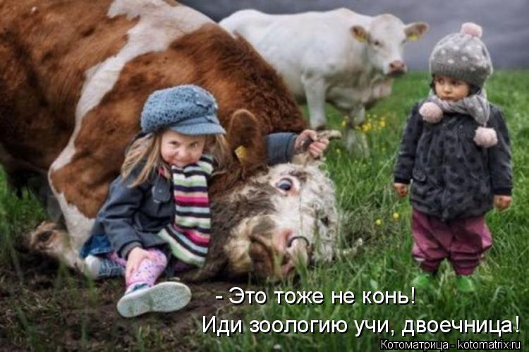 Котоматрица: - Это тоже не конь!  Иди зоологию учи, двоечница!