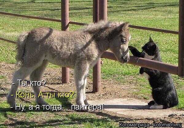 Котоматрица: - Ты кто? - Конь. А ты кто? - Ну, а я тогда... пантера!