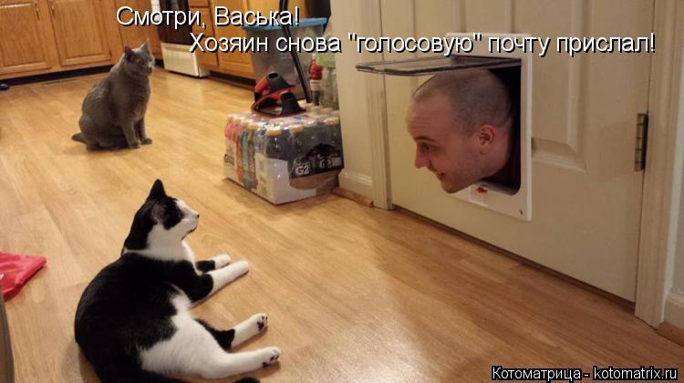 """Котоматрица: Смотри, Васька! Хозяин снова """"голосовую"""" почту прислал!"""