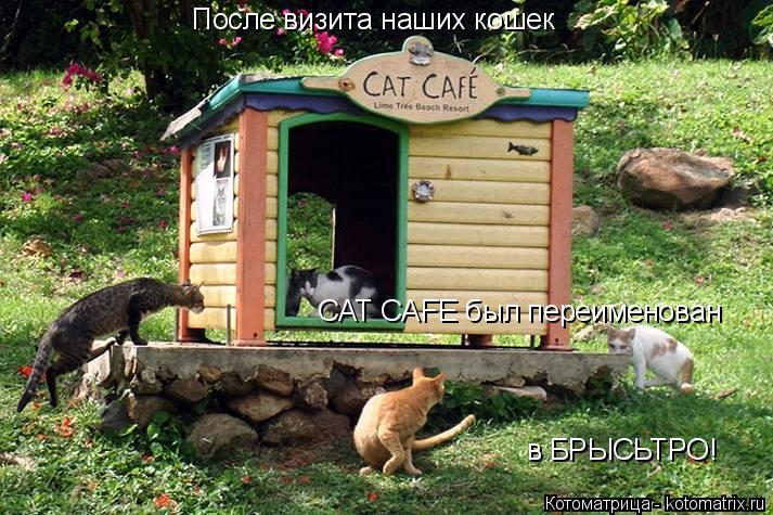 Котоматрица: После визита наших кошек в БРЫСЬТРО! CAT CAFE был переименован