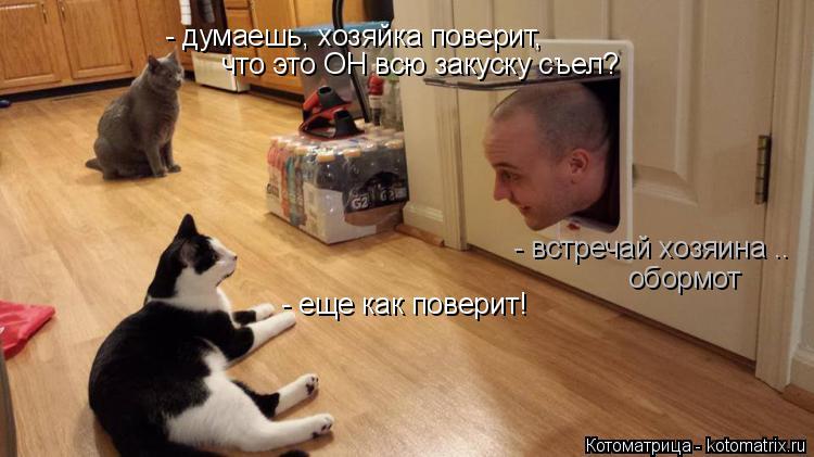 Котоматрица: - думаешь, хозяйка поверит, что это ОН всю закуску съел? - встречай хозяина .. обормот - еще как поверит!