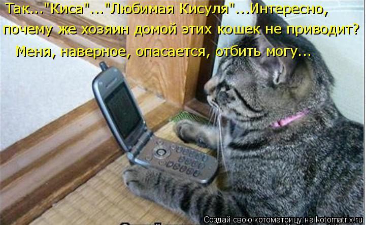 """Котоматрица: Так...""""Киса""""...""""Любимая Кисуля""""...Интересно,  почему же хозяин домой этих кошек не приводит? Меня, наверное, опасается, отбить могу..."""