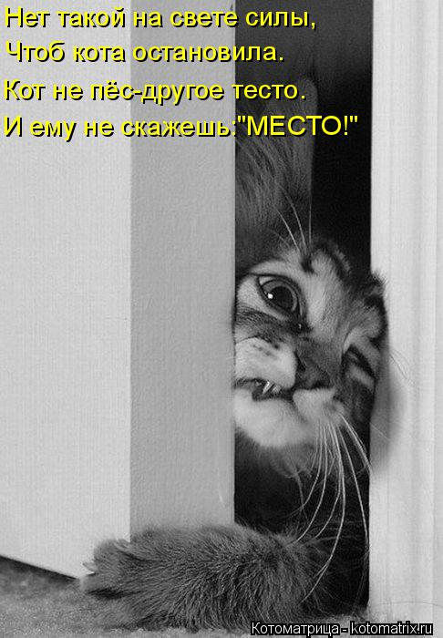 """Котоматрица: Нет такой на свете силы, Чтоб кота остановила. Кот не пёс-другое тесто. И ему не скажешь:""""МЕСТО!"""""""