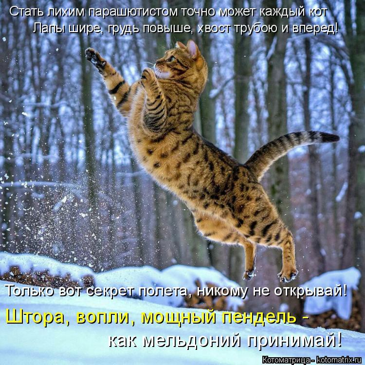 Котоматрица: Стать лихим парашютистом точно может каждый кот Лапы шире, грудь повыше, хвост трубою и вперед! Только вот секрет полета, никому не открывай