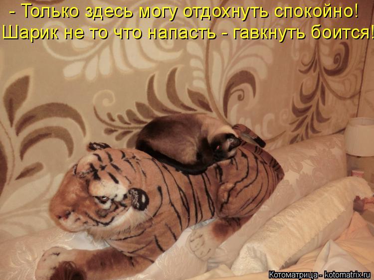 Котоматрица: - Только здесь могу отдохнуть спокойно! Шарик не то что напасть - гавкнуть боится!