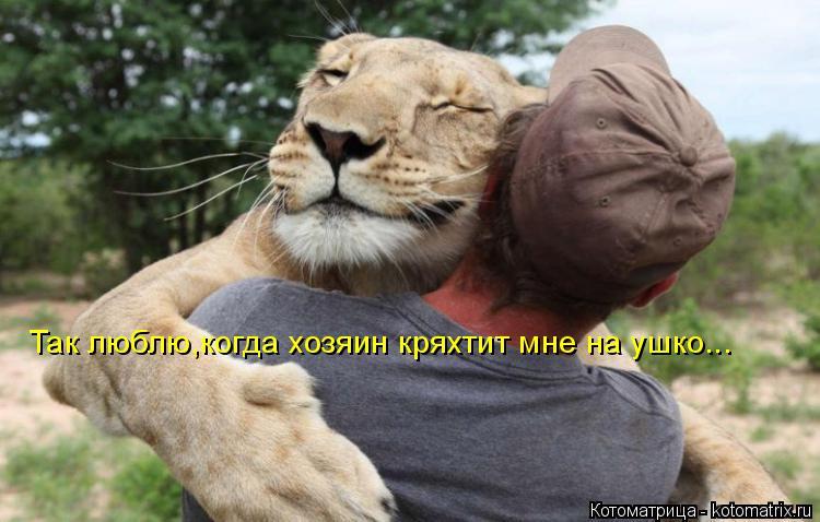 Котоматрица: Так люблю,когда хозяин кряхтит мне на ушко...