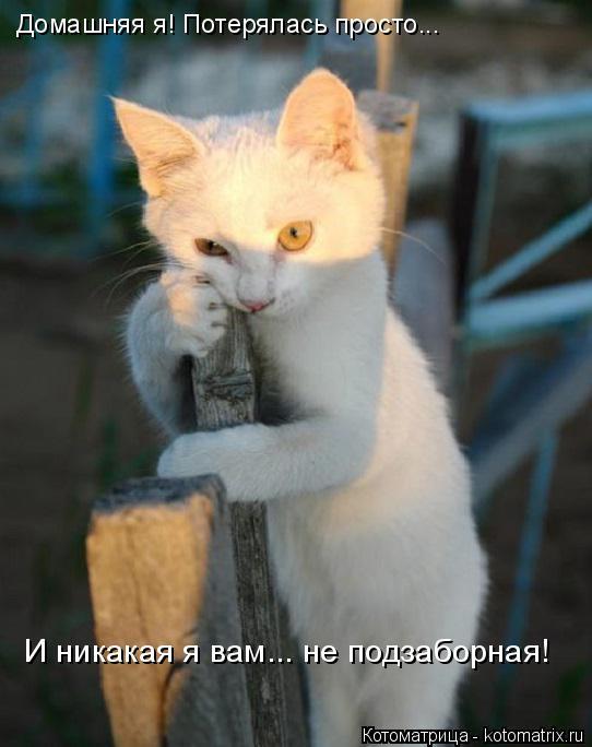 Котоматрица: И никакая я вам... не подзаборная! Домашняя я! Потерялась просто...