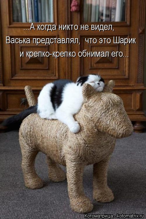 Котоматрица: ...А когда никто не видел, Васька представлял,  что это Шарик и крепко-крепко обнимал его...