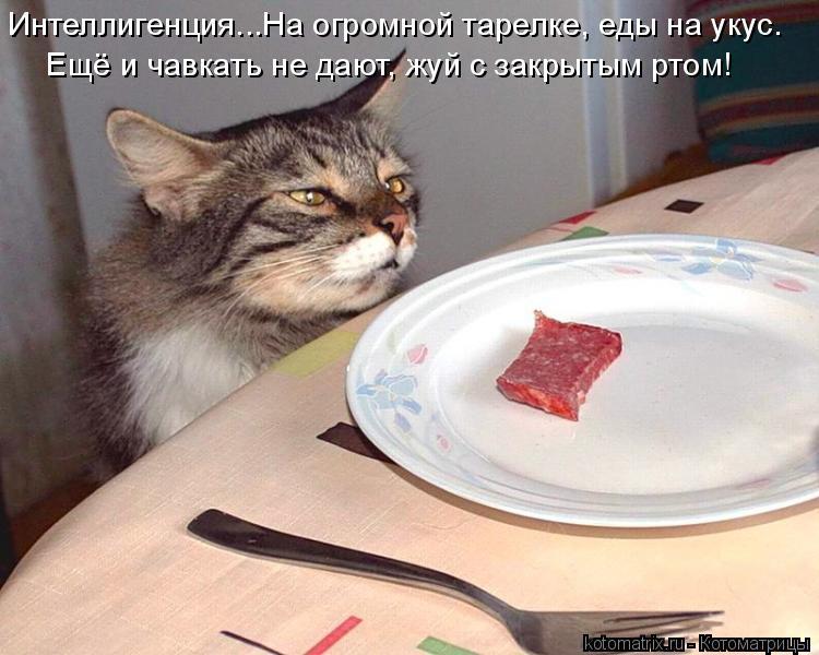 Котоматрица: Интеллигенция...На огромной тарелке, еды на укус. Ещё и чавкать не дают, жуй с закрытым ртом!