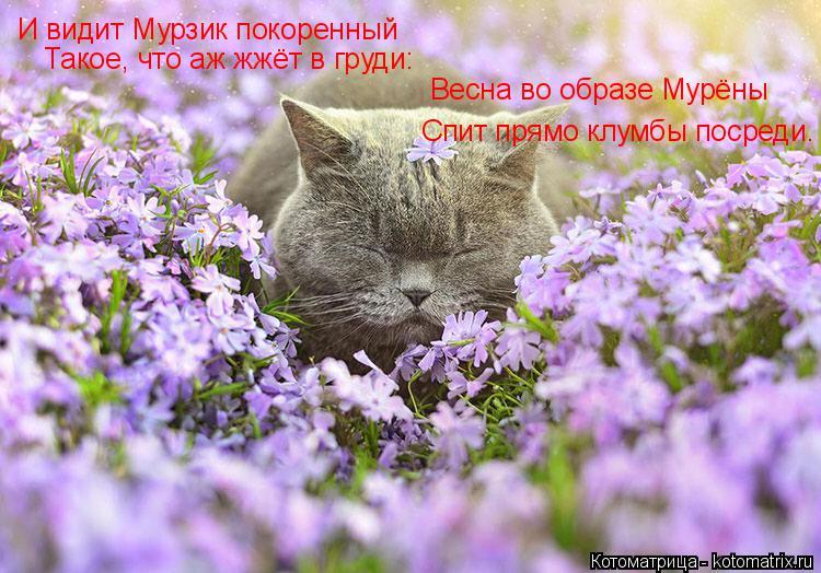 Котоматрица: И видит Мурзик покоренный Весна во образе Мурёны Спит прямо клумбы посреди. Такое, что аж жжёт в груди: