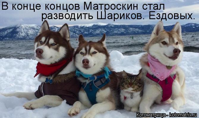 Котоматрица: В конце концов Матроскин стал разводить Шариков. Ездовых.
