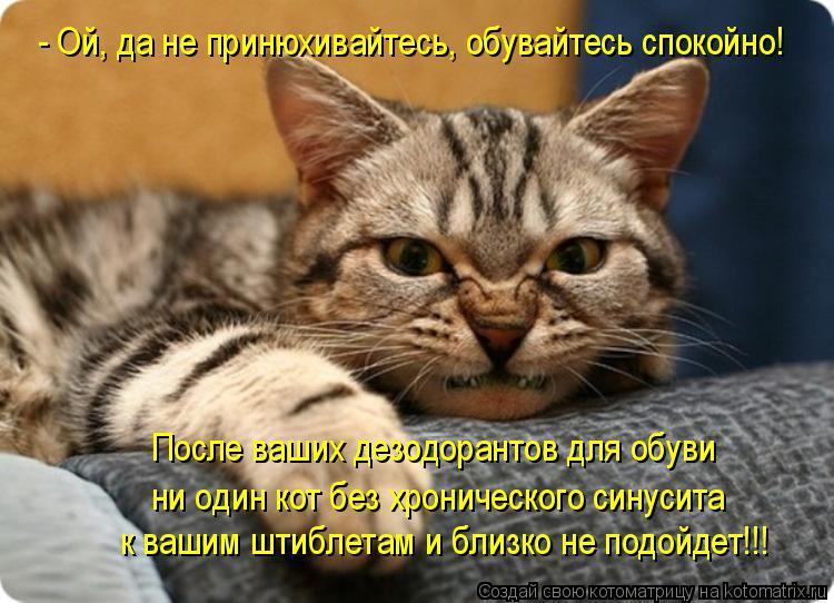Котоматрица: После ваших дезодорантов для обуви  ни один кот без хронического синусита  к вашим штиблетам и близко не подойдет!!! - Ой, да не принюхивайтес
