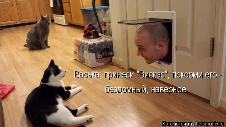 """Котоматрица: Васька, принеси """"Вискас"""", покорми его - бездомный, наверное..."""