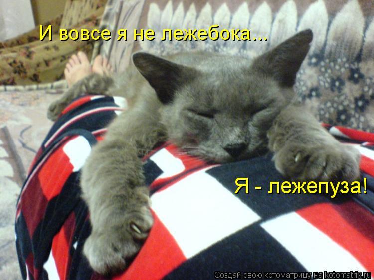 Котоматрица: Я - лежепуза! И вовсе я не лежебока...